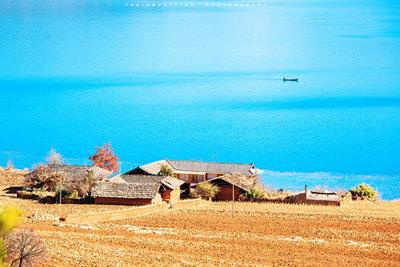 泸沽湖-情人树