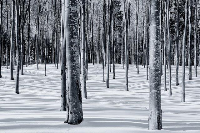 Schattenwald im Winter by Leo Pocksteiner