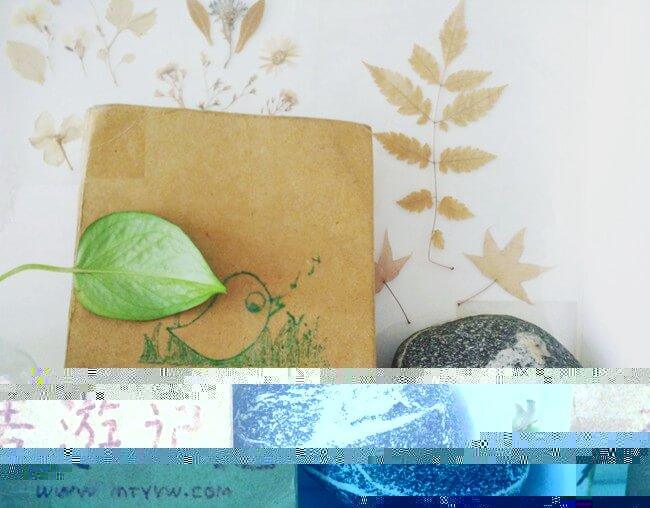 麦游记封皮中的小鸟和我家的小鸟石头