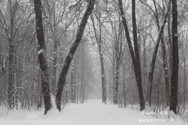 冬季的树林