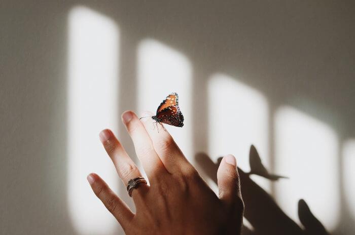 往事,蝴蝶