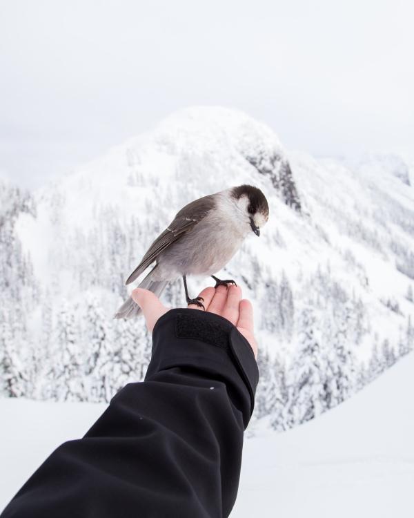 冬天,雪,鸟