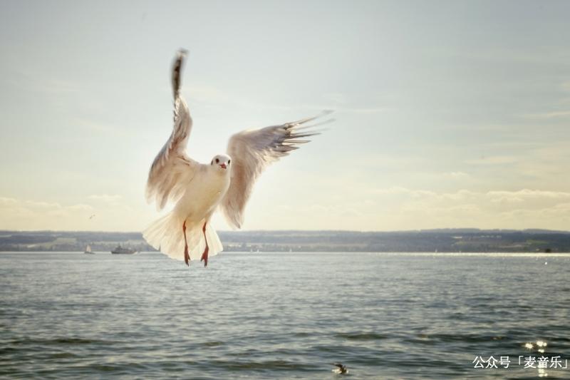 我带你飞翔