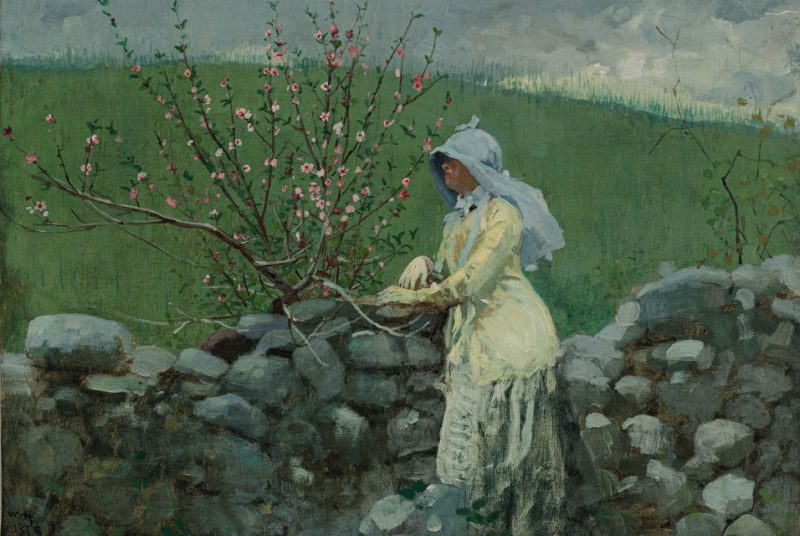 Peach Blossoms | Winslow Homer